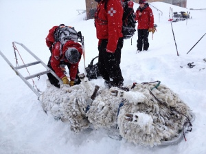 Save sheep strapped to ski patrol sled at Treble Cone - so many jokes waiting to happen